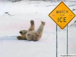 Медведь упал