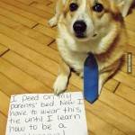 Деловая собака с галстуком