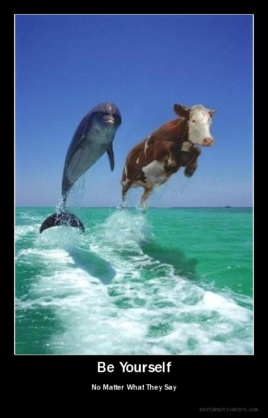 корова и дельфин плывут