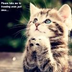 Мимимишный котёнок