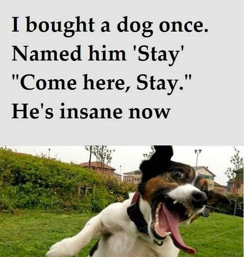 Команды собаке на английском
