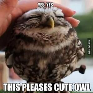 Милая сова
