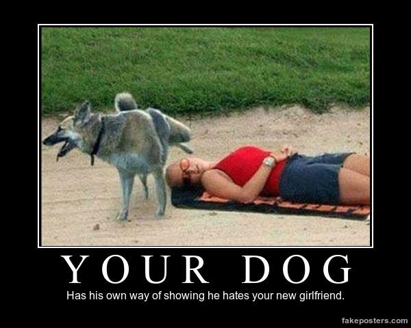 демотиватор на английском с собакой