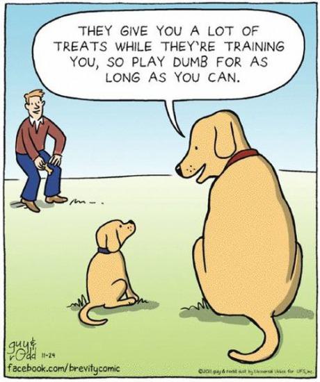 старая собака учит молодую