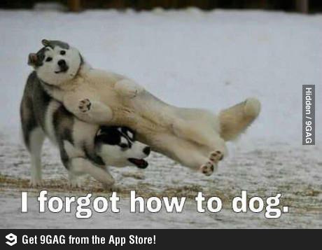 Смешная картинка с собаками на английском языке