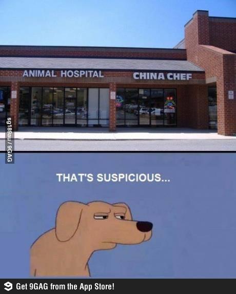 Собака-подозревака