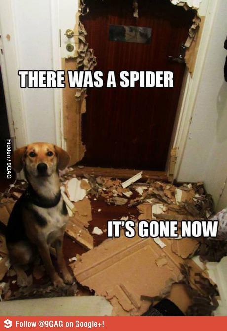 Паук и собака
