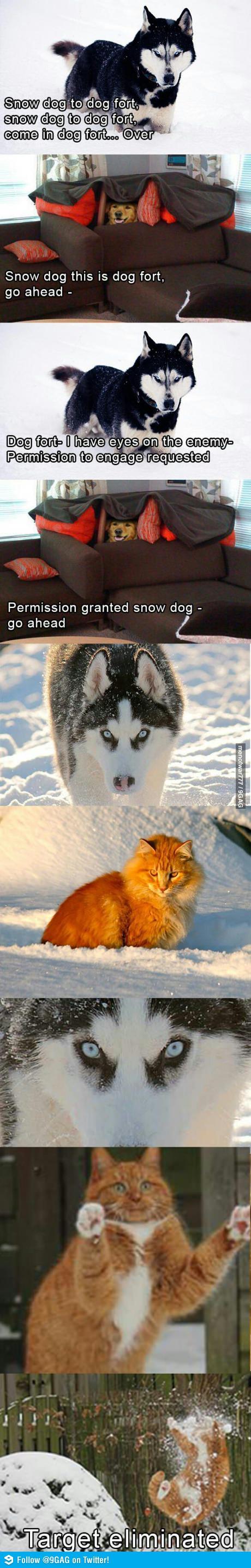 Смешная картинка с собакой