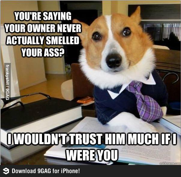 Собака-юрист картинки