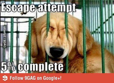 Собака пролезает через забор