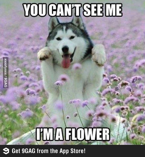 Собака притворяется цветочком