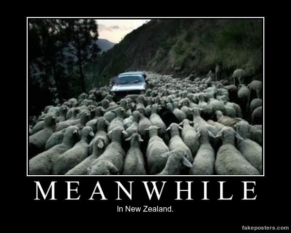 автомобиль и овцы