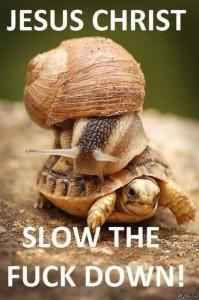 улитка на черепахе