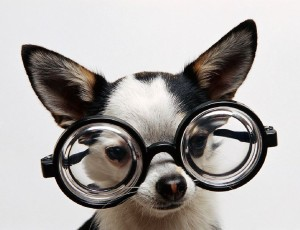 собака в очках - эксперт ЕГЭ