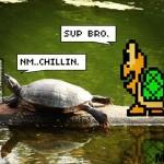 Черепахи разговаривают