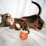 Запутавшийся котенок